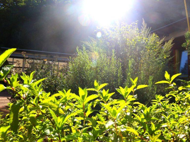Kräuter im Sonnenschein