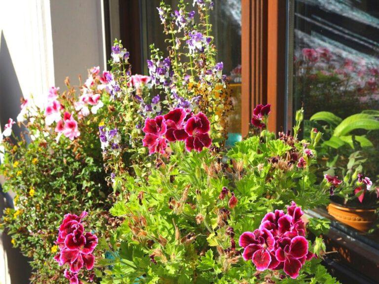 Lilafarbene Blumen